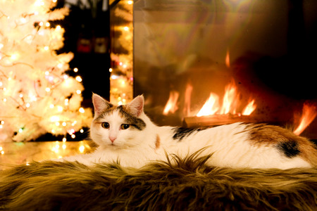 white cat lying by the fireplace Фото со стока