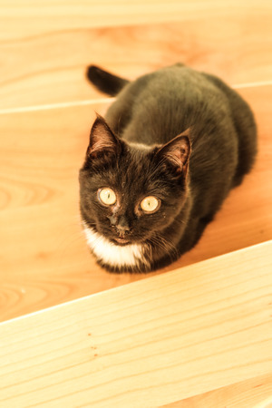 black kitten sits on the stairs