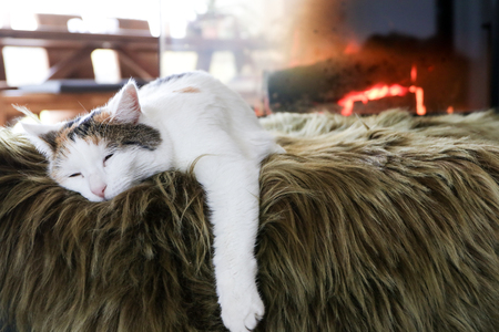 white cat lying by the fireplace Stock Photo