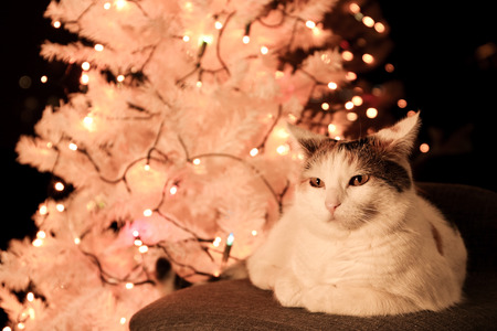 white cat lying by the christmas tree Stock Photo