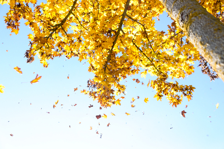 leaves fall from the tree