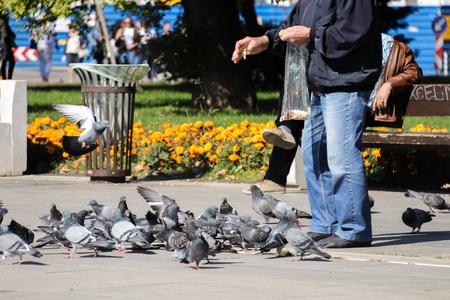 old man feeds pigeons