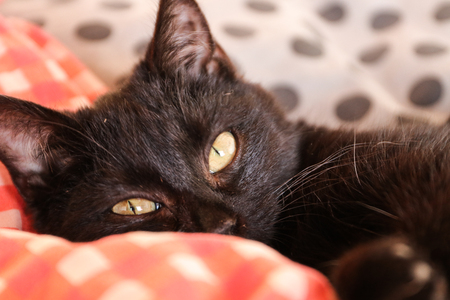black cat in the bed