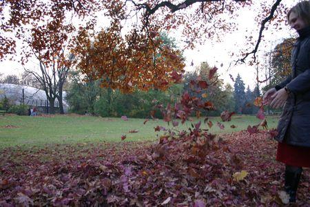 descriptive: Autumn leafs Stock Photo