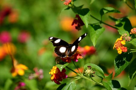 colurful: butterfly