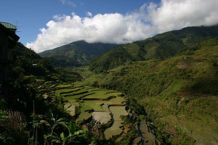 gradas: Rice Terrazas