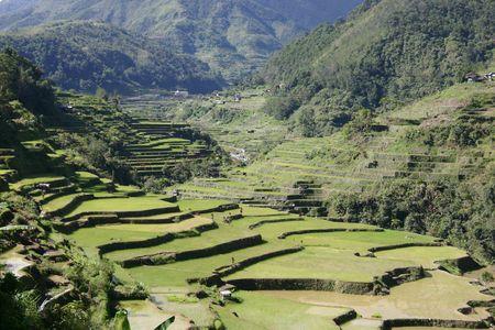 Los campos de arroz  Foto de archivo