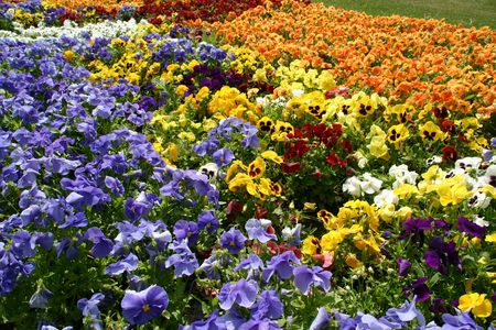 flores del color