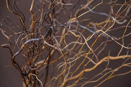 Twigs In Vase Stock Photo Picture And Royalty Free Image Image