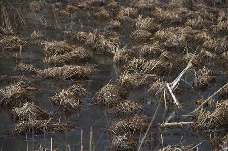 bayou swamp: swamp Stock Photo