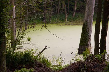 swamp Stock Photo - 3570111
