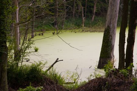 swamp Stock Photo - 3570111