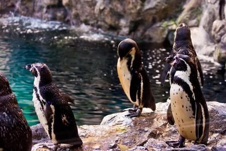 penguins Stock Photo - 8515649