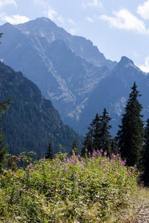 arbre: Javorova Valley in Tatry Mountains in Slovakia Stock Photo
