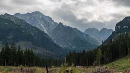 arbre: Javorova Valley in Tatry Mountains in Slovakia Stock Photo