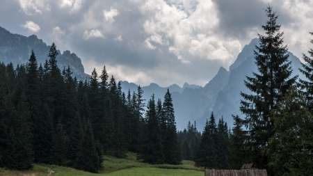 arbre: Bielovodska Valley in Tatry Mountains