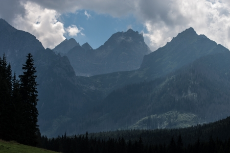 arbre: Bielovodska Valley in Tatry Mountains