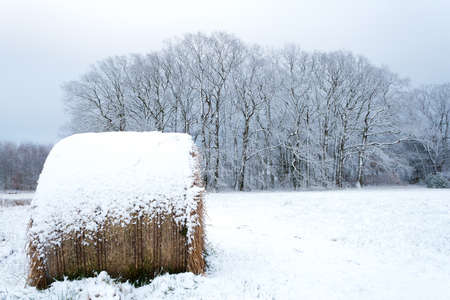 Snow-covered meadow after early winter