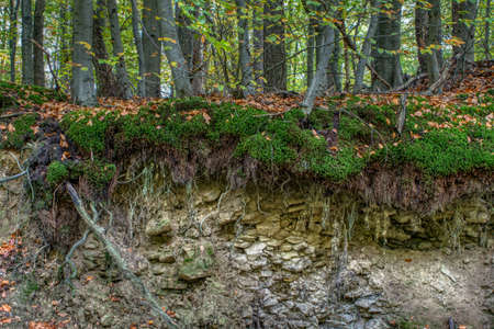 Interesting structure of a forest floor in the mountains