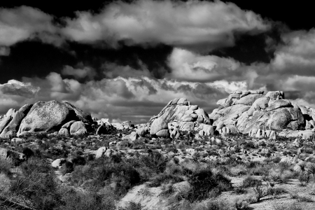 Joshua Tree National Park in Southern California, USA  photo