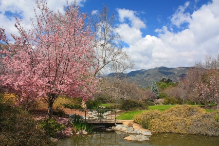Blooming Cherry Tree and pond Stock Photo - 15058155