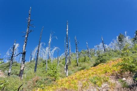 forest fire: Bosque de da�o de Fuego en el Bosque Nacional San Bernardino