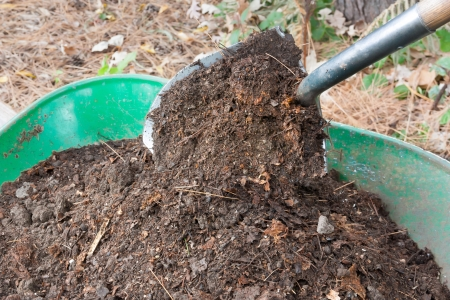 Shovel Shovel Giet Fertile Compost in Kruiwagen Stockfoto