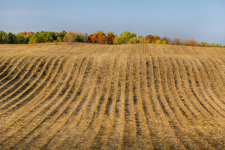 plowed: Furrowed Plowed Field in Late Autumn Panorama