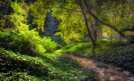 clearing the path: Sunlit Path at Chantry Flats in Early Morning