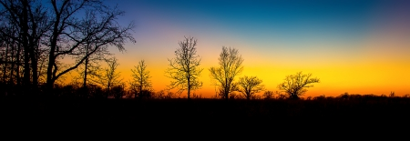 Sunset Through the Barren Trees in Late Autumn in Minnesota. photo