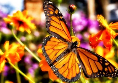 La migración de las mariposas monarca en octubre Foto de archivo - 16356794