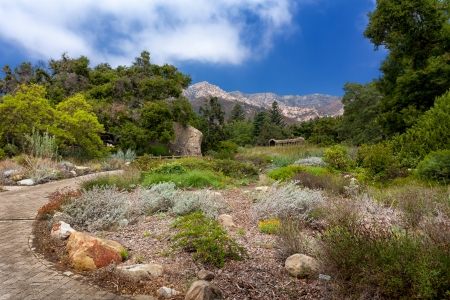 santa barbara botanic garden california stock photo 16356844 - Santa Barbara Botanic Garden