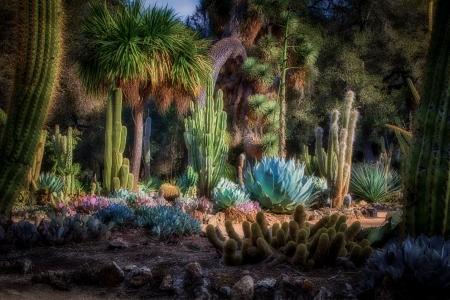 Arizona Cactus Garden on the grounds of Standford University in Palo Alto, California.