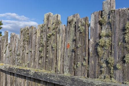 stockade: Moss Covered Stockade Fence Background or Backdrop Stock Photo