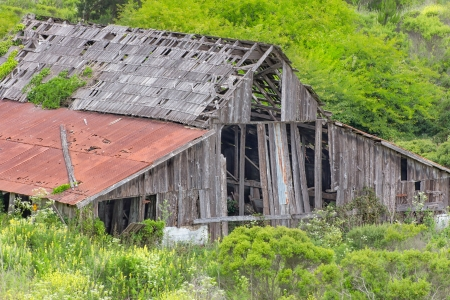 dilapidated: Dilapidated Rural Barn Overgrown by Green Brush Stock Photo