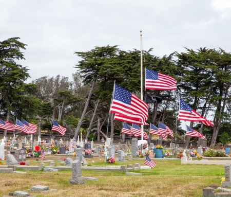 Cemetery Adorned with American Flags Honoring War Dead