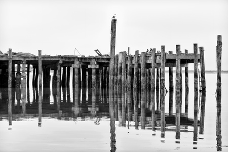 Reflection of Weathed Pier in Black and White at Bodega Bay photo