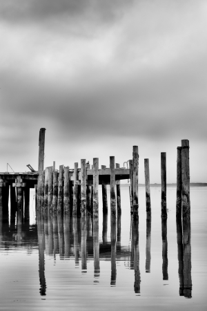 sonoma: Vertical Reflection of Weathered Pier in Black and White at Bodega Bay