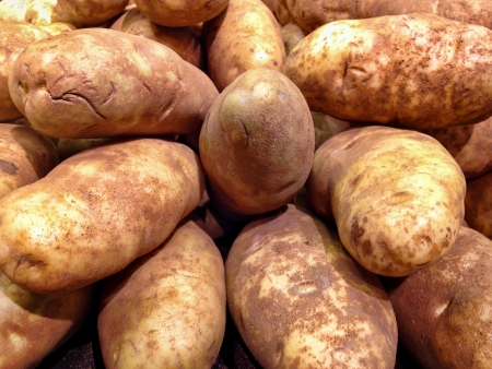 russet: Grouping of Large Russet Potatoes