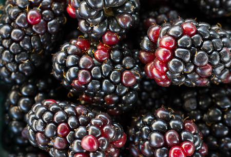 grouping: Macro grouping of blackberries in selective focus Stock Photo