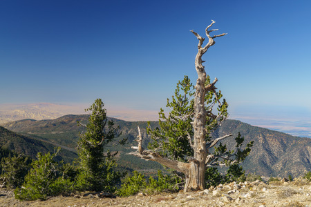 chaparral: The summit of Mount Pinos at 8,847 feet (2,697 m) above sea level in southern California. Stock Photo