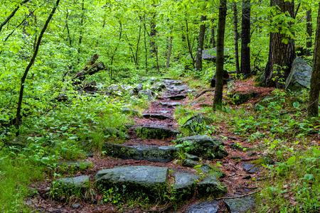 Rain covered stone path in lush green forest. Stock Photo