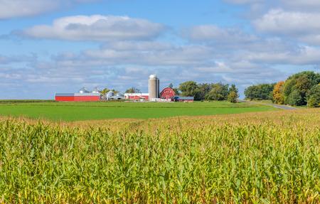 Rode schuur, bijgebouwen, silo en maïsveld panorama in het Amerikaanse Midwesten.