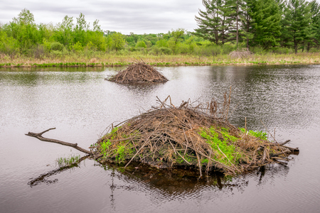 Two Beaver Dams at William O'Brien State Park in rural Minnesota. Stock Photo