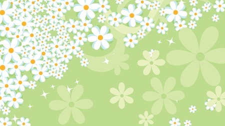 Cute floral background, Flower background, daisy