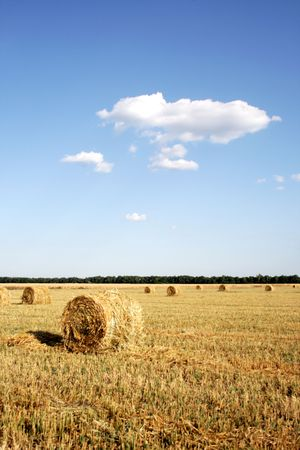 Field with hay after harvesting