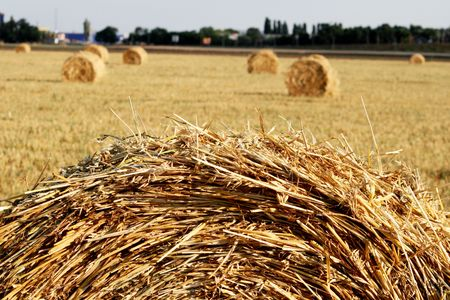 Hay is combined on a floor after harvesting