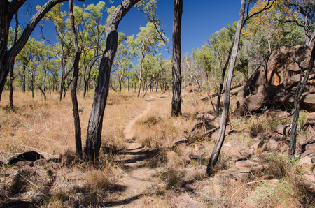 the outback: Desolated walking track in the australian outback.