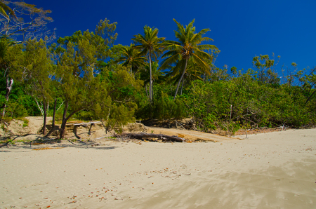 lonesomeness: Beach with coconut palms in the Cape Hillsborough National Park.