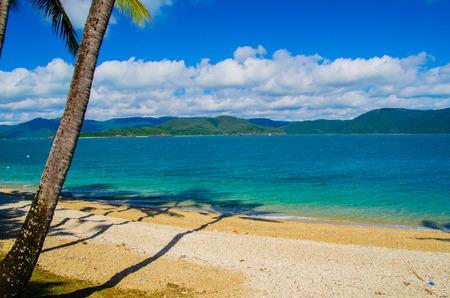daydream: Beach with palms on Daydream Island.